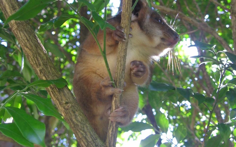 Possum visitor